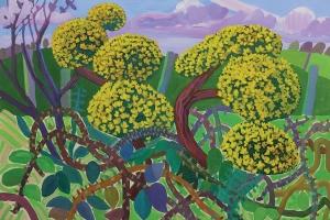 Gorse bushes, Black Dub Farm, Cumrew 2020